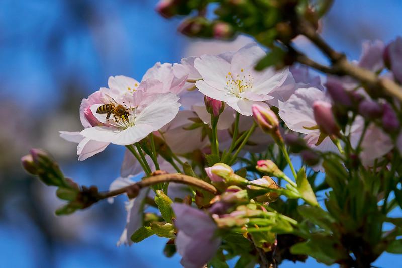 20200407 Spring is in the air! img 0001.jpg