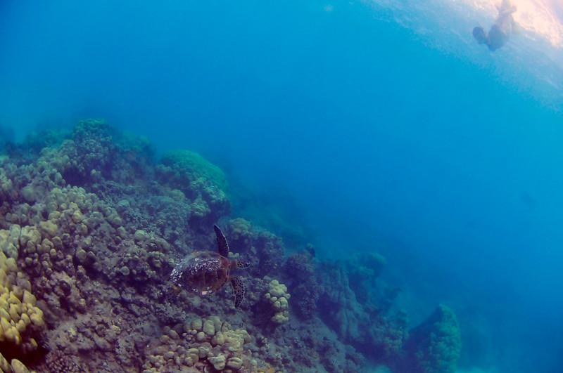 Hawaii - Hanauma Bay-41.JPG