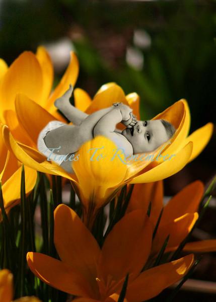 In a flower+.jpg