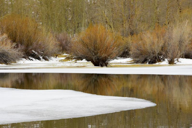 The Cool Stillness of Winter