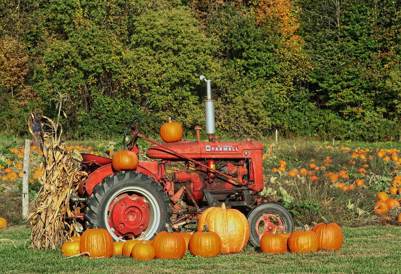 Tractor in Pumkin Field