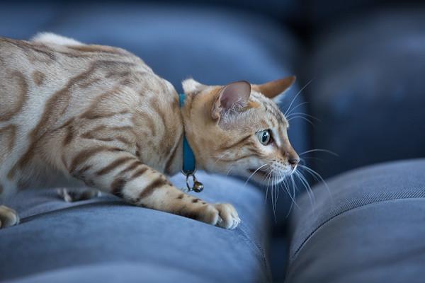 Solo Cat 1.05.18