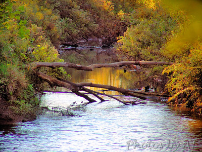 2005-10-08 Mallard Lake Creve Coeur