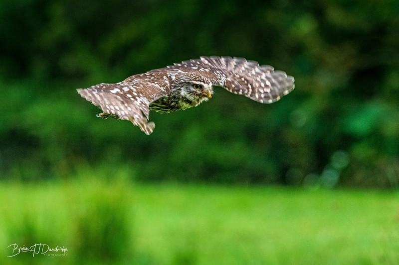The Little Owl Shoot-6876.jpg