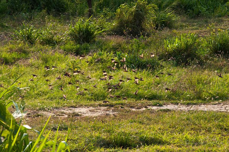 Sri-Lanka-Hurulu-Eco-Park-Elephant-5538.jpg