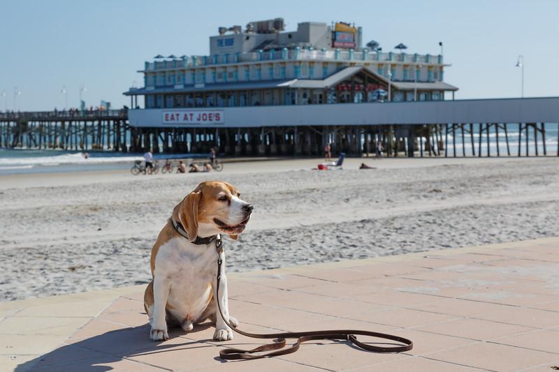 Brody adds Daytona Beach to his resume of adventures