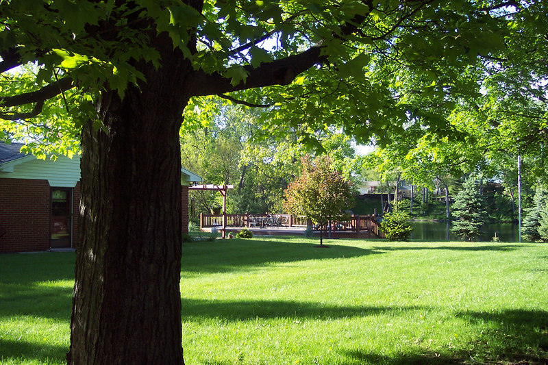 trees 052.jpg