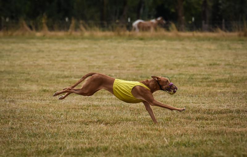 pharoahhound-23.jpg