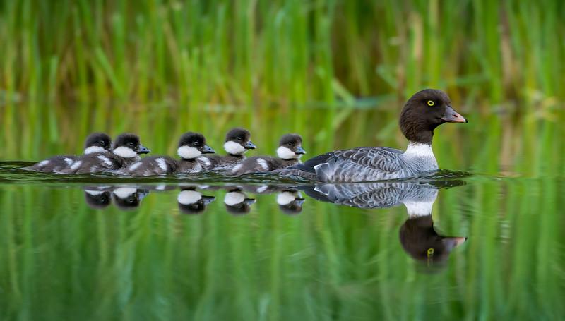 Ducks in Order