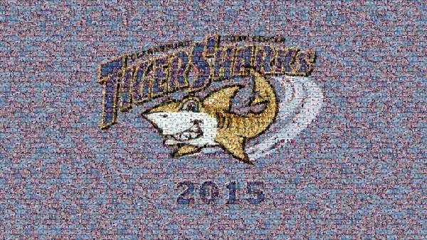 CTC Tiger Sharks 2015 Slideshow