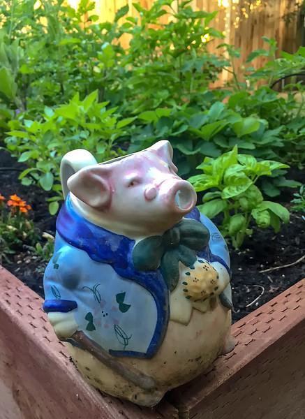 garden pig.jpg