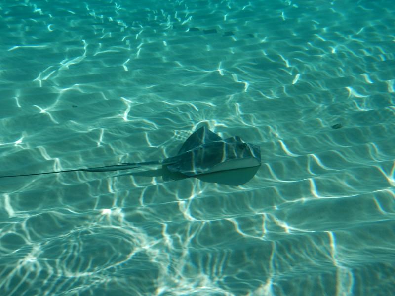 170129-104356-Stingray Sandbar-0507.JPG