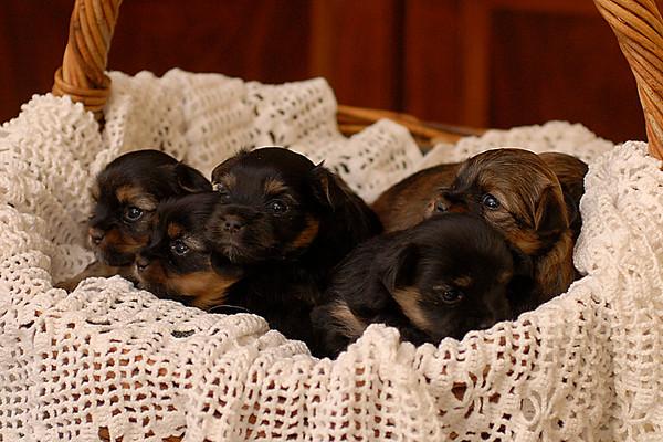 Alana's puppies