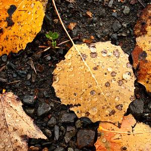 Trees & Leaves