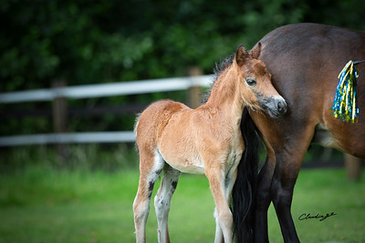 Millies Filly