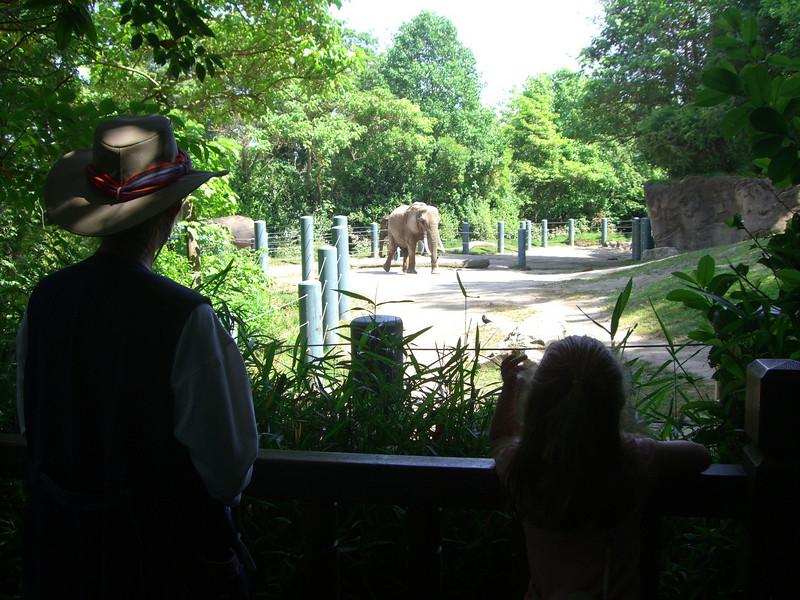 Elephants.  Zoo trip with Grandmama Carol, Papa Ben, Whitney, Kimber and I (June '09).