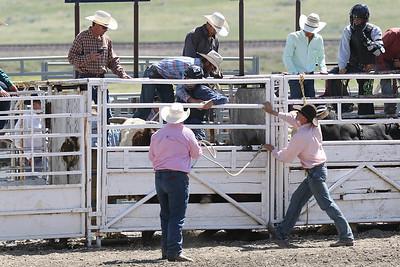Bull Riding June 4
