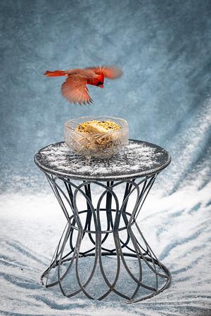 Nature -Birds