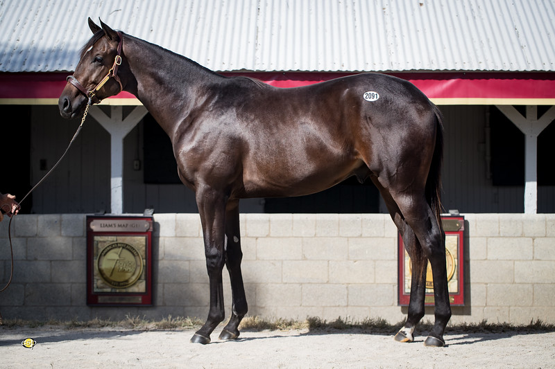 2091 Speightstown - Magical Dream 18