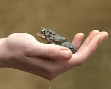 Bray Catchin' Toads - Goose Creek - 4.22.2009