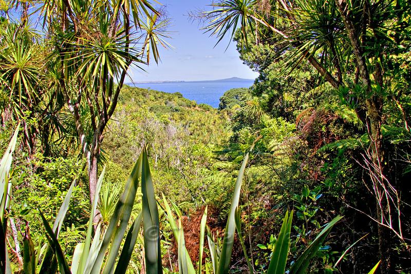 Foliage Opens on a Tiri Trail