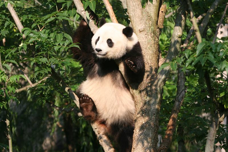Panda072807_048.JPG
