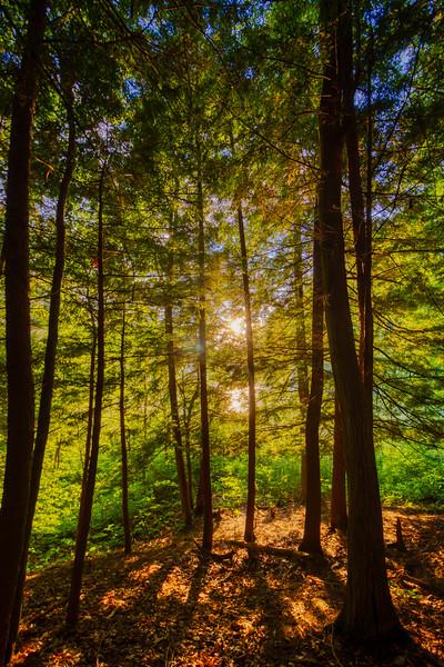 SunnyTrees-2.jpg