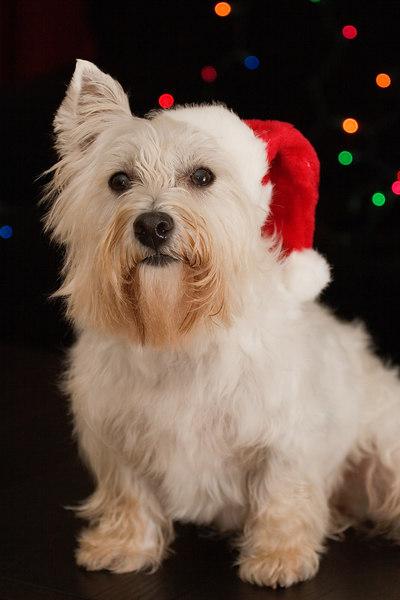 Nori Christmas