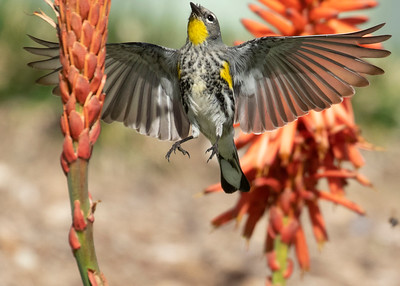 Terrenea Birds
