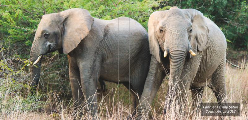 Pannier Family Safari 2018