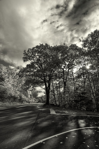 Fall Foliage in Black and White