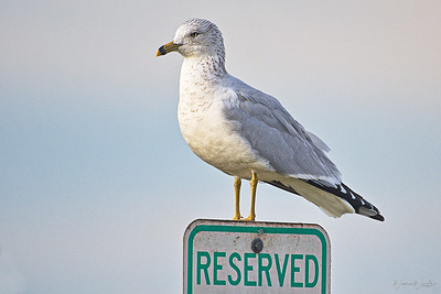 Birds on Signs