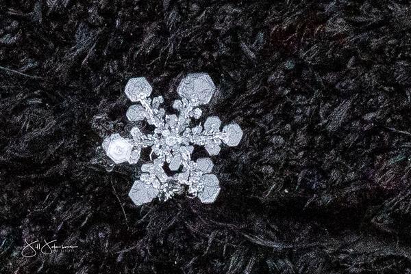 snowflakes-1474.jpg