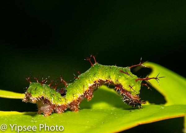 Caterpillar PICKS