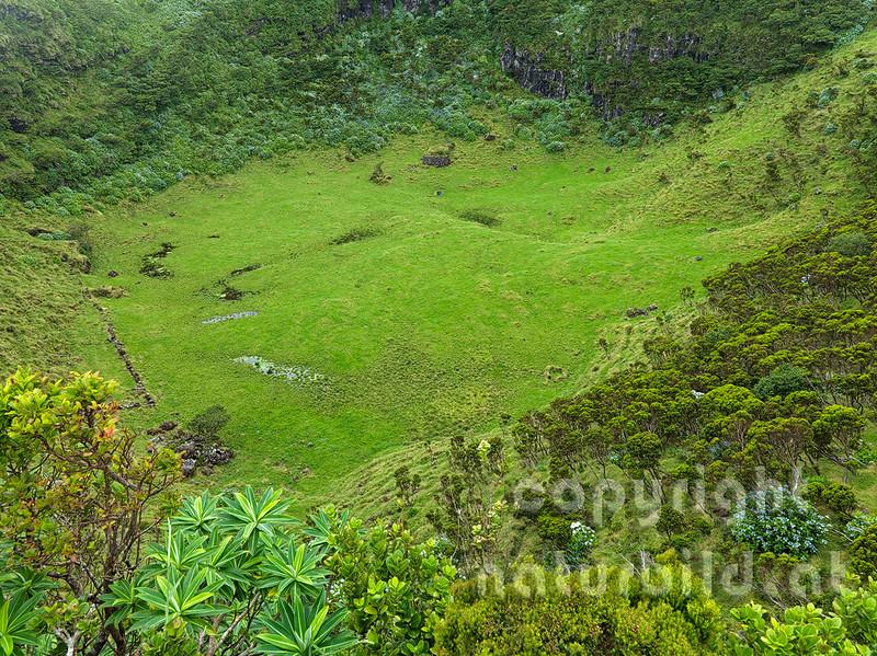 Kleiner Vulkankrater, bewachsen, Insel Pico, Azoren, Portugal,