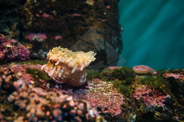 The Birch Aquarium