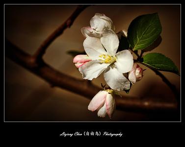 Unknown flower-10