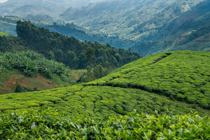 Nyugwe-Rwanda-19.jpg