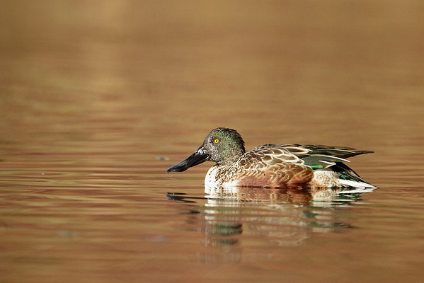 Bird Images - 2013