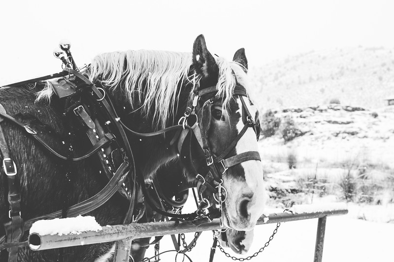 Horse Print-4.JPG
