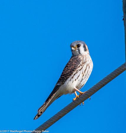 day 4 So FL Birding-466