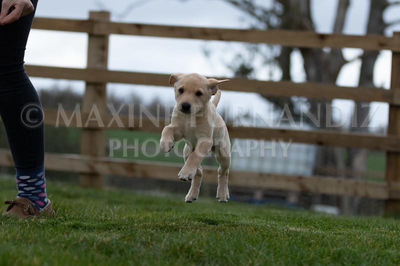 Weika Puppies 24 March 2019-6598.jpg