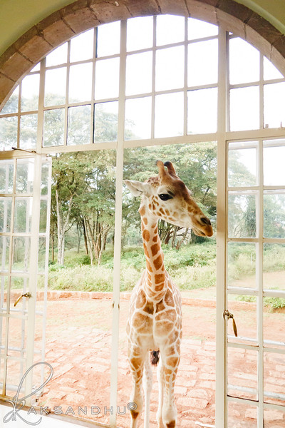 Safari-Africans-108.jpg