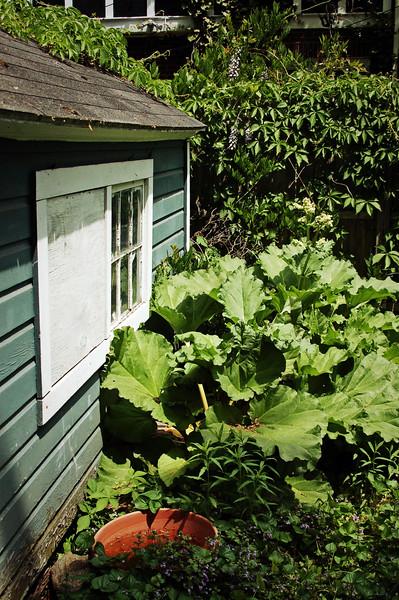 Backyard Plant #2