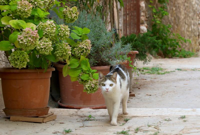 Vrboska kitty on Hvar Island