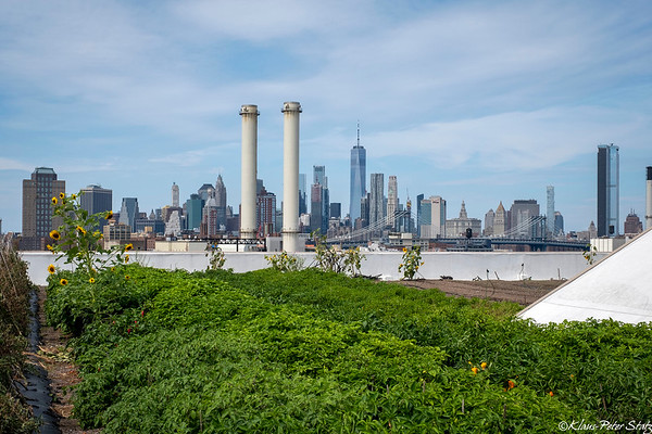 Brooklyn Navy Yard Rooftops Tour September 2019