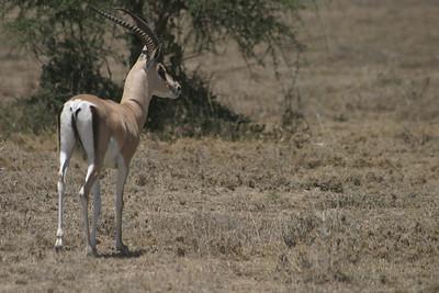 Kenya Roadside 2005