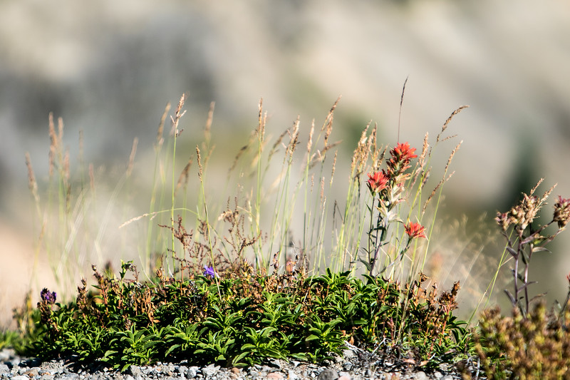 2015 West Coast Flowers and Birds (36 of 39).jpg