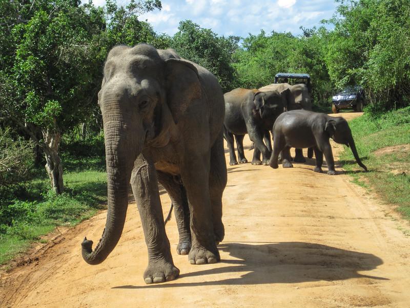Sri_Lanka17-9849.jpg