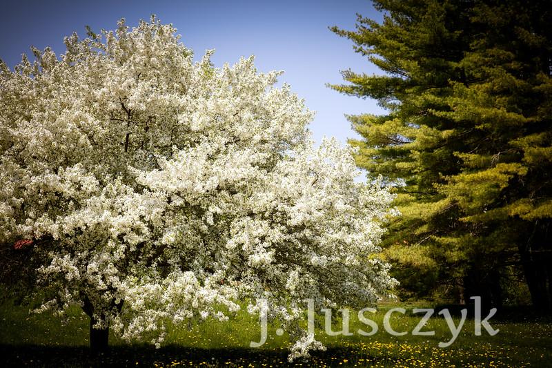 Jusczyk2021-9619.jpg